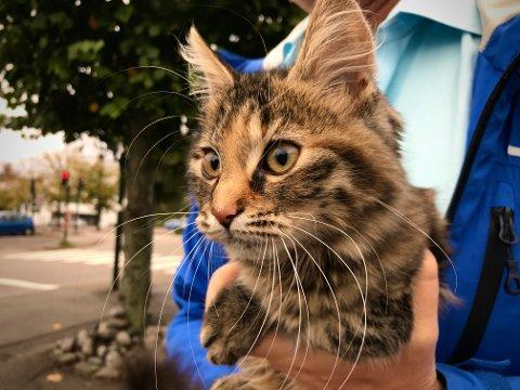 Denne kattungen ble funnet ved Teie torv i forrige uke. Etterlysning av eier på Facebook og i Øyene har hittil ikke gitt resultater.