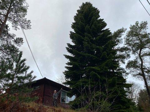 HØYT: Årets juletre på Rådhusplassen blir svært. Fokke van der Meer nederst til venstre.
