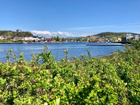 DYREST: Porsgrunn kommune topper statistikken i Grenland.