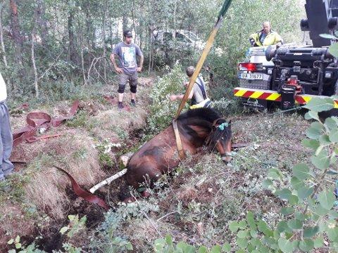 Brannvesenet fikk dratt opp hesten ved hjelp av stropper.