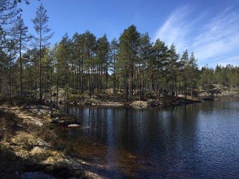 ULOVLIG JAKT: Det er fra dette området ved Frønsessjøen som skuddene ble hørt.