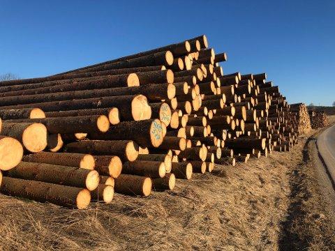 MYE TØMMER: Viken Skog har så langt kjøpt 7000 m3 med tømmer fra Rakkestads skoger.