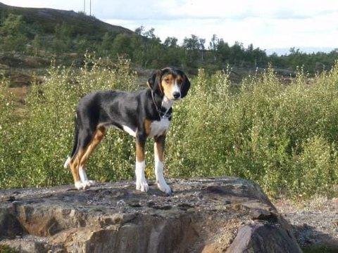 Hunden Trampe sov i bilen som ble stjelt fra Mobekken i natt.