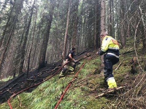 MOELV: Skogbrannfaren er meget stor i Ringsaker nå, men heldigvis har distriktet vært forskånet mot de store brannene. Onsdag rykket brannvesenet ut til en brann langs Moelva utenfor Moelv.