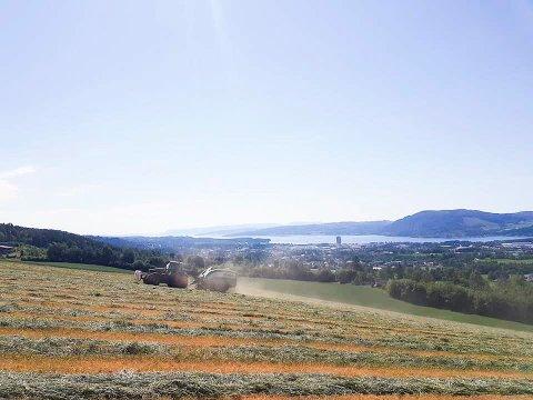 SLO 40 MÅL: 40 mål med hvete ble slått på jordene til Bjørgeberget Samdrift torsdag. Samdriften består av tre Veldre-gårder.