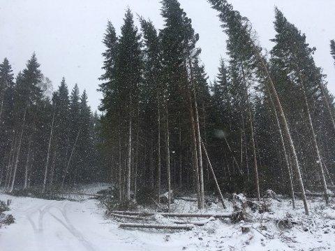 TRÆR FALLER: Flere steder har det blitt meldt om trær som har blåst over ende mandag. Her har et tre falt over en veg i Veldre.