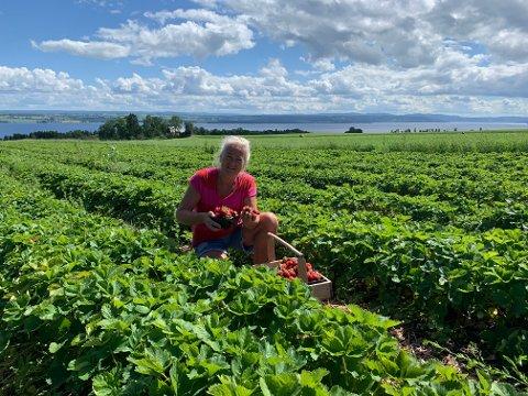 Klar til innsats: Jordbærprodusent Lars Erik Nordhagen må ty til sjølplukk for å få opp bæra. Svigermor Gunvor Haugom (bildet) tar gjerne et tak i åkeren.