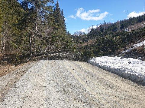 Stengt: Dette treet må fjernes før bilistene kan passere her i Kvisselvegen.