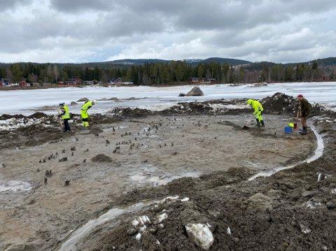 800 år Tilbake i historie: Arkeologer fra KHM og Innlandet fylkeskommune graver frem ei kattise fra middelalder.