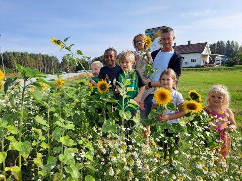Solsikkeaksjon: Førskolegruppa i Nes barnehage selger solsikker til inntekt for SOS-barnebyer. Her er Andrè, Ebbisoo, Isak, Sara, Åge, Mathilde og Mari i solsikkeåkeren.