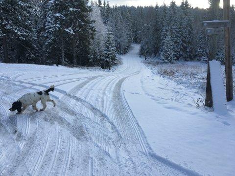Både to- og firbeinte kan glede seg over snø på Ringkollen.