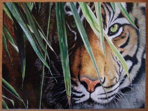 hanna mills tiger