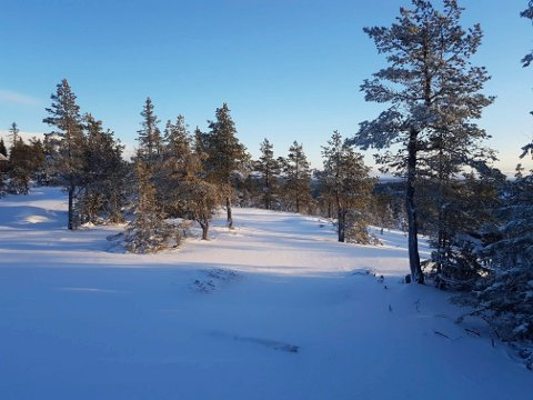 FINE FORHOLD: Slik så det ut på Ringkolltoppen mot Nordmarka onsdag formiddag.