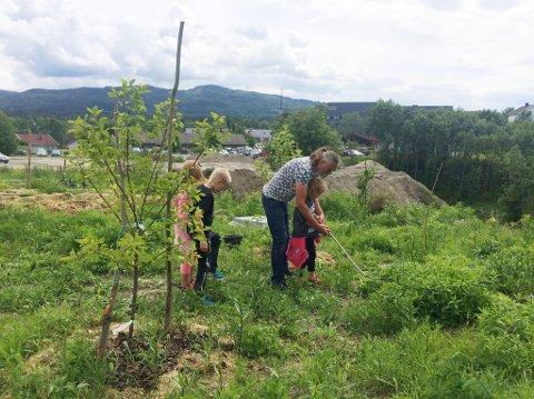 Både gøy og nyttig: I Jevnaker Hage får du lære om ville planter, om naturen, om mat, og ikke minst egen helse.