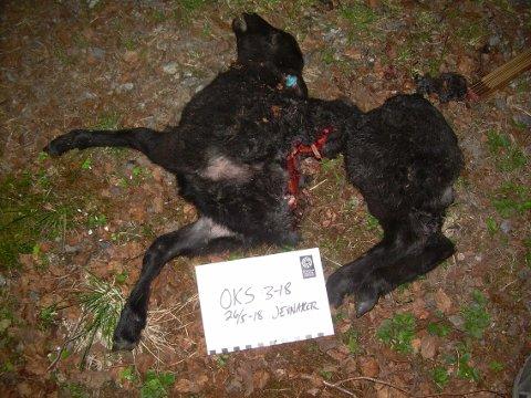 SKAMFERT: To lam ble funnet døde, mens ett tredje måtte avlives på grunn av skadene det var påført.
