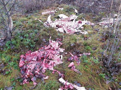 EKKELT FUNN: Marielle Risth fant masse dyreknokler og innvoller som var dumpet rett ved siden av en turvei inne på Helgelandsmoen.