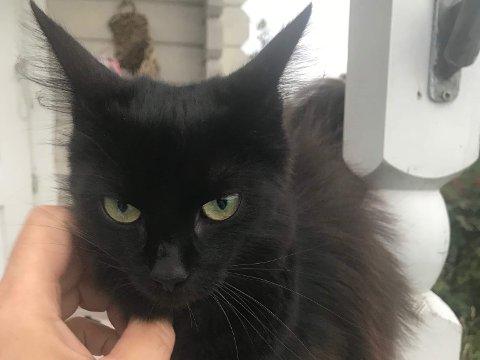 HJEMME IGJEN: Katten Maja kom hjem etter å ha vært savnet en måned. Sulten, men i god form.