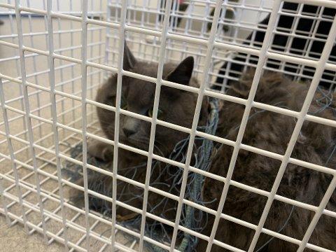 Det viste seg at katten var chippet og var registrert på Kattens SOS i 2016.
