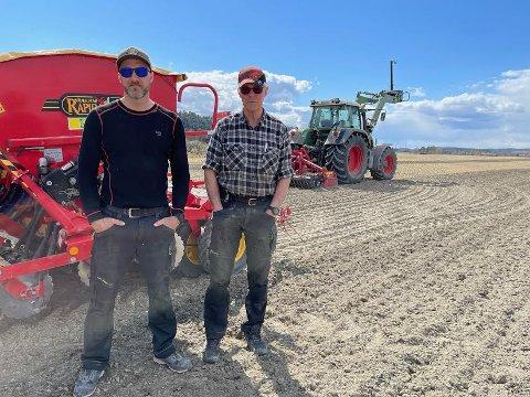 EKSTRA ARBEID: Henrik Hornemann og Jan Fredrik Hornemann har en stri jobb med å¨så på nytt etter de store ødeleggelsene av høsthveten.