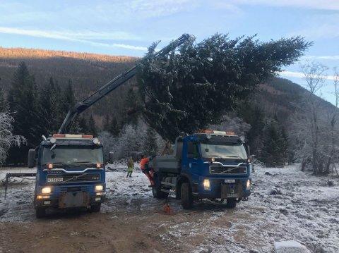 HENTET PÅ MÆL: Grana ble saget ned og hentet på Klonteig, midt mellom Miland og Mæl. - Tinn kommune takker for det flotte treet, skriver kommunen på facebook.