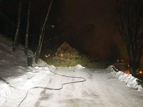 SKOG: Trær blåste over veien i Skogveien. Dro med seg linjenettet. (privat foto)