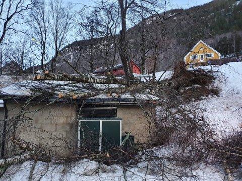 Rotvelt på Rjukan . Treet landet på en garasje i Ligate.
