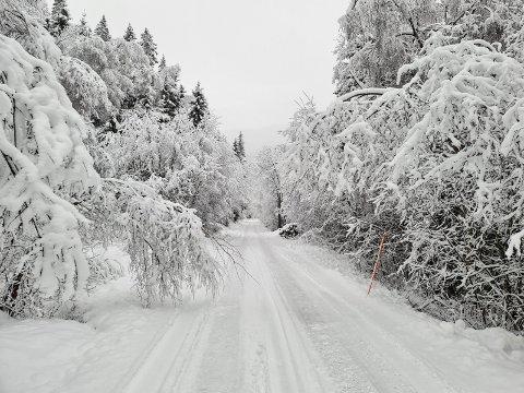 SNØRIK: Dette bildet ble tatt like før nyttår, og en ser tydelig at snøen tynger vegetasjonen på begge sider av Rollagveien.