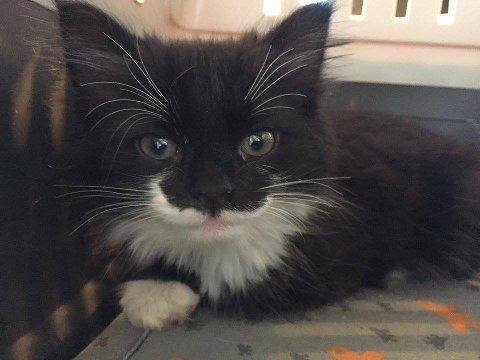 Kattungen var i grei form, men hadde den ikke blitt funnet hadde den nok ikke overlevd.