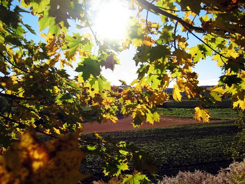 Til helga får vi oppleve høstværet vi har savnet, men det kan lønne seg å ta på vindjakka.