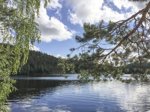 Et plantefunn i Tævsjøen i Aurskog i 1907 har fått mange botanikere til å klø seg i hodet. Beskrivelsen av funnet er troverdig, men den er ikke gjenfunnet. Nærmeste ville bestand i Norge finner man i Kautokeino.