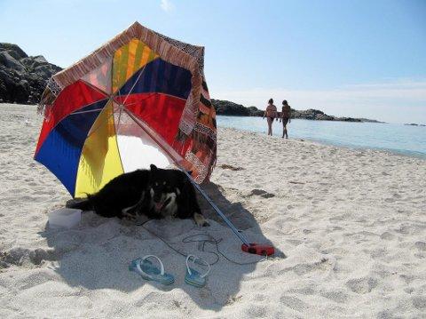 HOT-DOG: Hunden risikerer å bli overopphetet i sommervarmen. Hundeiere rådes nå til å passe ekstra godt på og gi hunden nok vann. Foto: Berit Keilen (NTB scanpix)