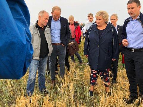 GÅRDSBESØK: Statsminister Erna Solberg (H) var i dag på Kløfta for å se på en av årets kornavlinger som har tørket vekk. FOTO: TOM GUSTAVSEN