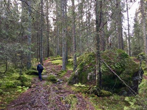 SER PÅ VERN: Østmarka har både store naturverdier og er et svært viktig rekreasjonsområde. Nå skal Fylkesmannen utarbeide et høringsdokument for nasjonalpark. Her i gammelskogen opp mot Ramstadslottet i Rælingen.