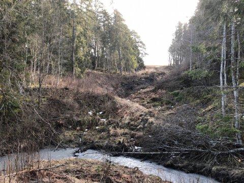 SKJEVE TRÆR: Det nye skredet har gått inne skogen til venstre for bildet. Øverst til venstre ser man skjeve trær.