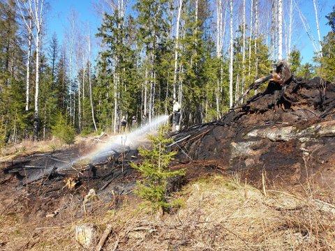 Slik så det ut etter en mindre skogbrann i Ullensaker langfredag. FOTO: ØRBR