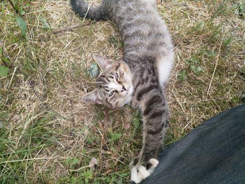 Katt funnet