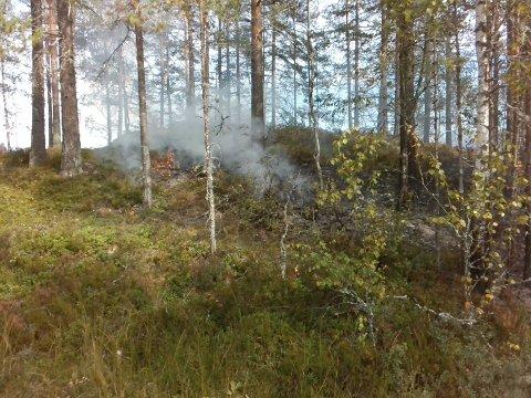 HOLME: Skogbrannen var på en holme ved Søndre Holsjøen.