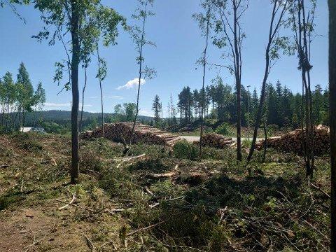 HOGST: Naboene til denne skogen på Finstadjordet forvtiler over at deler av skogen hogges, og frykter mer støy og støv fra pukkverket.