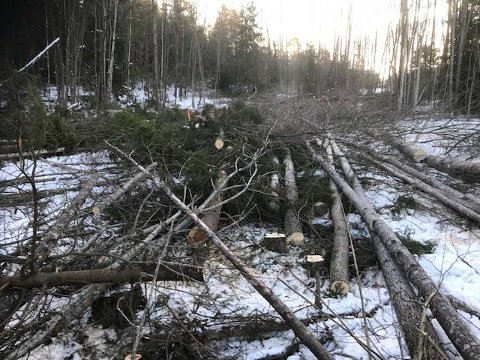 RYDDER VEI:Hagen Maskin har startet arbeidet med å rydde vei gjennom området hvor den nye adkomstveien til Torvbråten skole skal gå fra Sundbyveien.
