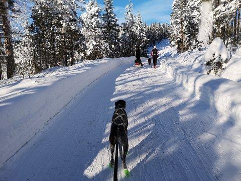 STIKKVANNSVEIEN: Er det snø nok,  kan Stikkvannsveien være et godt alternativ når man kjører fort med hund på ski og det er mange barn i skiløypa ved siden av.  Veien er også super for gående uansett føre.