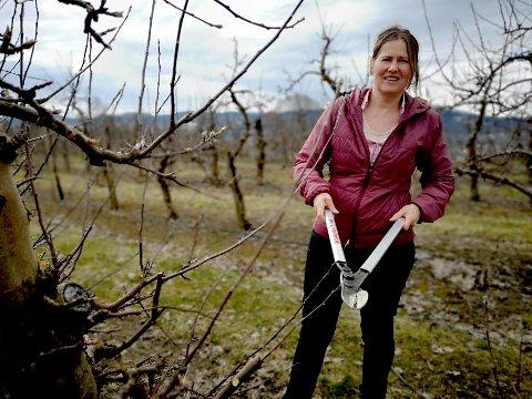Med 15 000 epletrær å passe på blir det mange trær å trimme og grener å fjerne for Merete Hyggen og de andre på Hyggen gård de neste ukene .