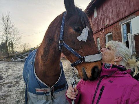 BANDASJERT: Milito får god pleie og trøst av driftsleder Inger-Marie Torgunrud ved Eid gård.