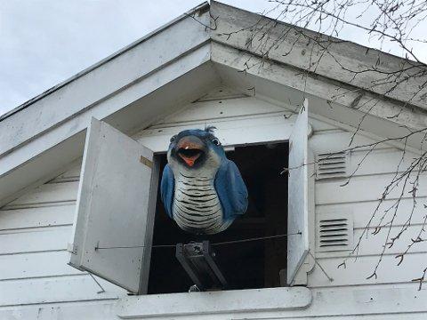 GJØK: Den Sibirske blågjøken i Vollen kommer ut takket vær en sinnrik innretning som er designet av Øivind Jorfald i reneste Reodor Felgen Stil.