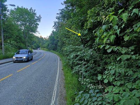 FØLG PILEN: Ser du hva som står på dette skiltet? Det røde og hvite skiltet angir fartsgrensen ved Slemmestadveien  mellom Bødalen og Slemmestad.