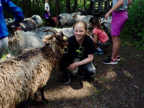 TRYGGERE: Sommerskole-deltaker Signe forteller at hun nå er blitt venn med dyrene etter å ha vært litt skeptisk til dem før hun kom til Grytebakke Gård.