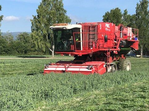 HØSTING AV ERTER: Denne uken starter bøndene og Findus innhøsting av erter. De varsler at noe av dette arbeidet kan skje på natten.