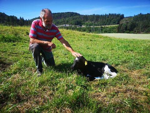 Denne kalven er bare noen dager gammel. Den yngste på gården er kun 30 minutter. – Som regel er de oppe på beina etter å ha levd 5 minutter, og drikker melk fra moren 10 minutter senere, sier gårdbruker Hans Kristian Teien.