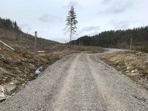 ÅPENT LANDSKAP: Flathogsten ble gjennomført i 2019. For hvert grantre som ble tatt ned, er det plantet to nye. I forgrunnen ses den opprustede veien og snuplassen i enden.