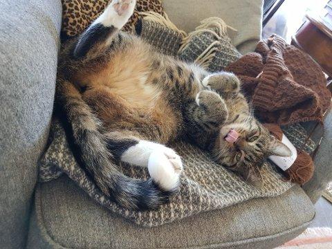 ØNSKER SEG NY EIER: Molly (2), som er klar for et nytt hjem, bor for tiden i fosterhjem. Nå er Dyrebeskyttelsen på jakt etter flere fosterhjem til katter.