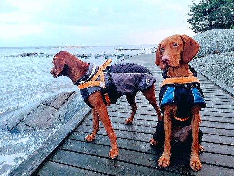 BÅNDTVANG: Hunden både trenger, og vil, løpe. Båndtvang kan begrense hundens naturlige instinkter, og i perioden 1. april til 20. august må du som hundeeier gå, løpe eller sykle sammen med hunden din-i bånd.